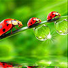 Cute  red ladybirds slide…